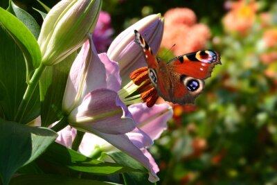 Fotomural 188 mariposa