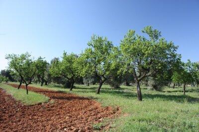 Fotomural 3 arbres