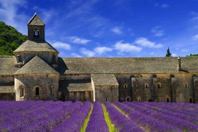 Fotomural Abadía de Senanque y filas en flor flores de lavanda. Gordes, Lu