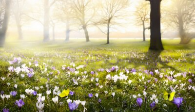 Fotomural abstracto soleado hermoso fondo de primavera