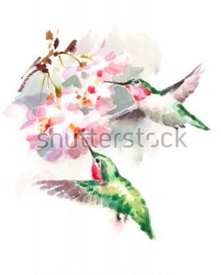 Fotomural Acuarela aves colibríes volando alrededor de las flores de cerezo flores mano a mano jardín de verano