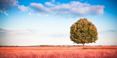 Fotomural Aislado árbol en un campo de trigo toscana - (Toscana - Italia) - Imagen en tonos con espacio de copia