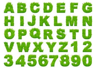 Fotomural Alfabeto de hierba verde con las letras y números