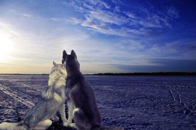 Fotomural Amantes - dos perros se encuentran la puesta de sol