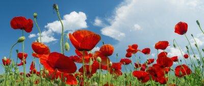 Fotomural amapola roja y las nubes