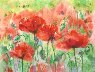 Fotomural Amapolas rojas flores de fondo, acuarela.