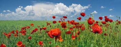 Fotomural amapolas rojas y cielo con nubes