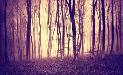 Fotomural Amarillo púrpura de la vendimia coloreó la luz mística en paisaje asustadizo del bosque.