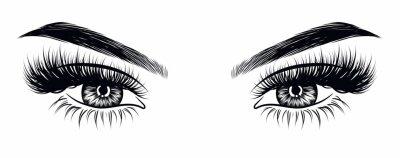 Fotomural Apariencia de maquillaje sexy de mujer dibujada a mano con cejas perfectas perfectamente formadas y pestañas adicionales. Idea para la tarjeta de visita de negocios, vector de tipografía. Mirada perfe