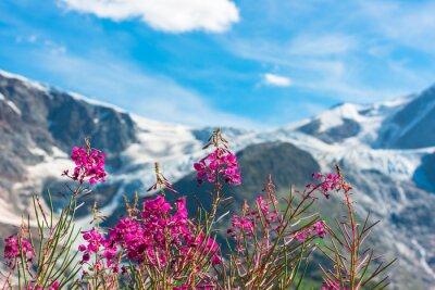 Fotomural Apls suizos con flores de color rosa salvaje