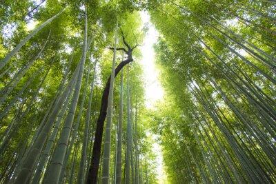 Fotomural Arashiyama, bambú, bosque, kyoto, japón