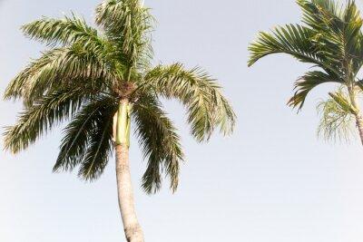 Fotomural Árbol de coco y cielo azul en la playa de verano