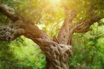 Fotomural Árbol grande en el bosque