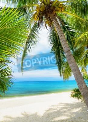 Fotomural Árbol verde en una playa de arena blanca