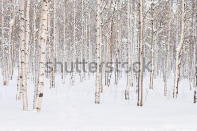 Fotomural Árboles en el parque o el bosque en la nieve del invierno