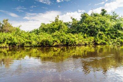 Fotomural Árboles que cubren el río Yacuma en Bolivia
