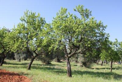 Fotomural arbre 2