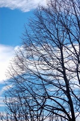Fotomural arbre