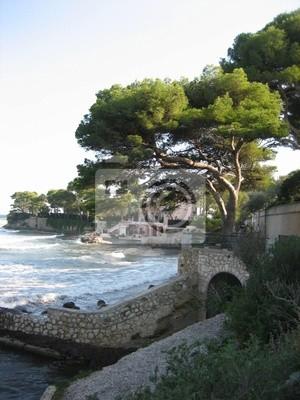 Fotomural arbre près de la côte