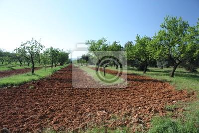 Fotomural arbres 4