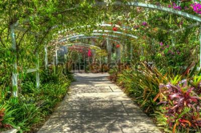 Fotomural Arco cubierto con flores de colores brillantes en el jardín botánico de Naples FL