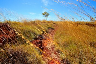 Fotomural australiano, outback
