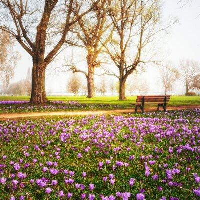 Fotomural Azafranes de primavera