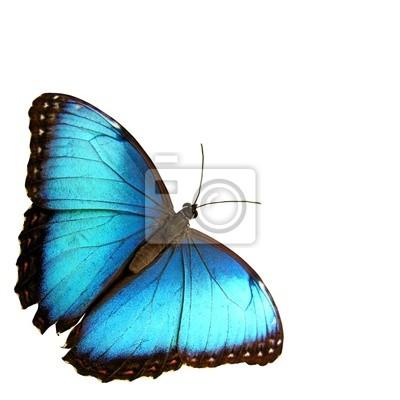 Fotomural azul