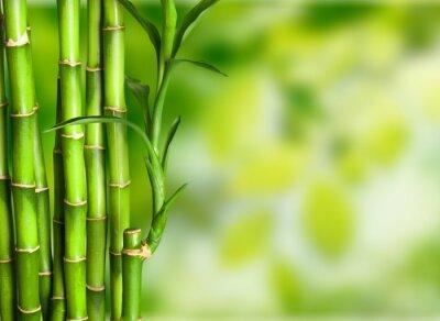 Fotomural Bambú.