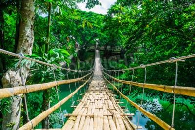 Fotomural Bambú peatonal puente colgante sobre el río en el bosque tropical, Bohol, Filipinas