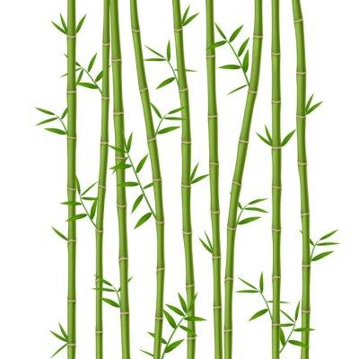 Fotomural Bambú verde con hojas aisladas sobre fondo blanco