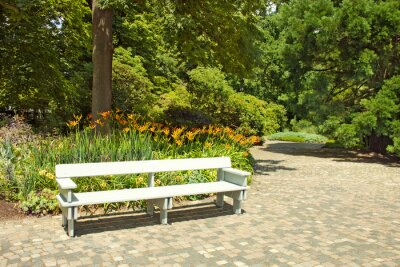 Fotomural Banco de madera solitaria en el parque.