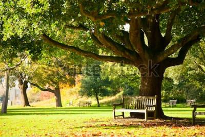 Fotomural Banco debajo del árbol en el Real Jardín Botánico de Londres