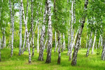 Fotomural Birchgrove