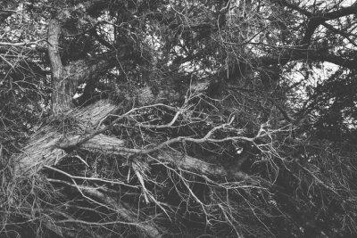 Fotomural Blanco y negro cerca en las ramificaciones sin hojas torcidas. Orgánico