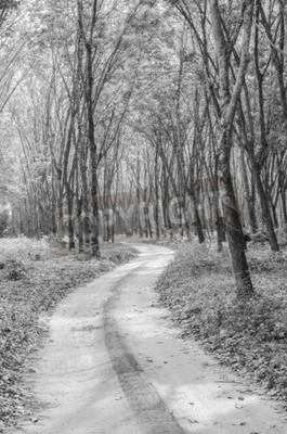 Fotomural Blanco y negro del camino hacia el bosque