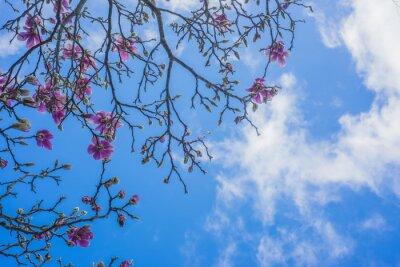 Fotomural Blooming árbol de magnolia