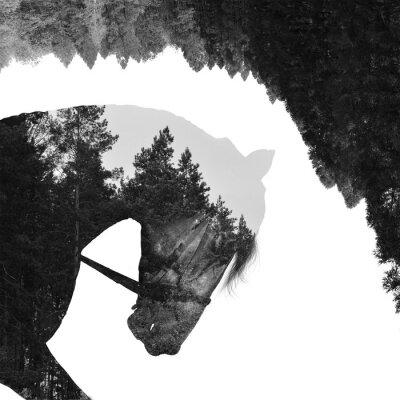 Fotomural Bosque de abeto dentro del caballo en arte, multiexposición
