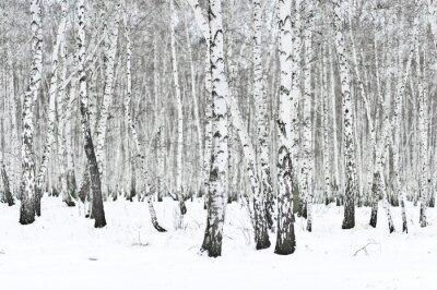 Fotomural bosque de invierno