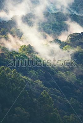 Fotomural Bosque de niebla en tropical