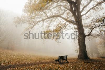Fotomural Bosque en otoño con niebla y sol
