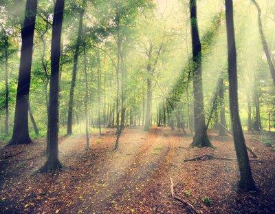 Fotomural bosque mágico en myst con rayo de sol