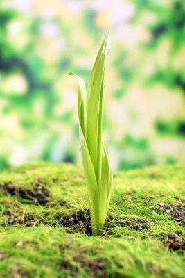 Fotomural Brote joven en primavera, primer plano