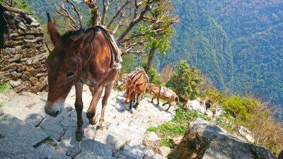 Fotomural Burros de montaña en nepal