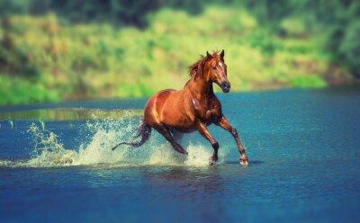 Fotomural caballo