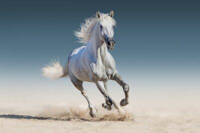 Fotomural Caballo blanco correr galope