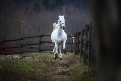 Fotomural Caballo blanco corriendo