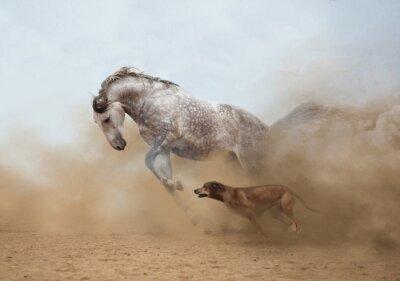 Fotomural Caballo lusitano