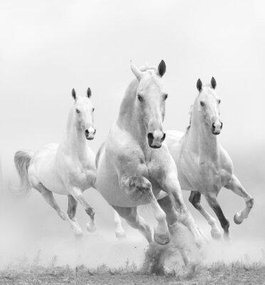 Fotomural caballos blancos en polvo