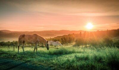 Fotomural Caballos salvajes y la salida del sol toscana